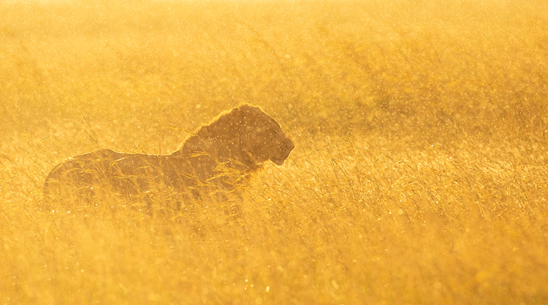 Nature & Wildlife Photography by Christian Biemans